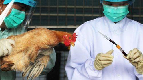 С октября прошлого года вКитае свирепствует новая— самая масштабная за последнее время— эпидемия птичьего гриппа.