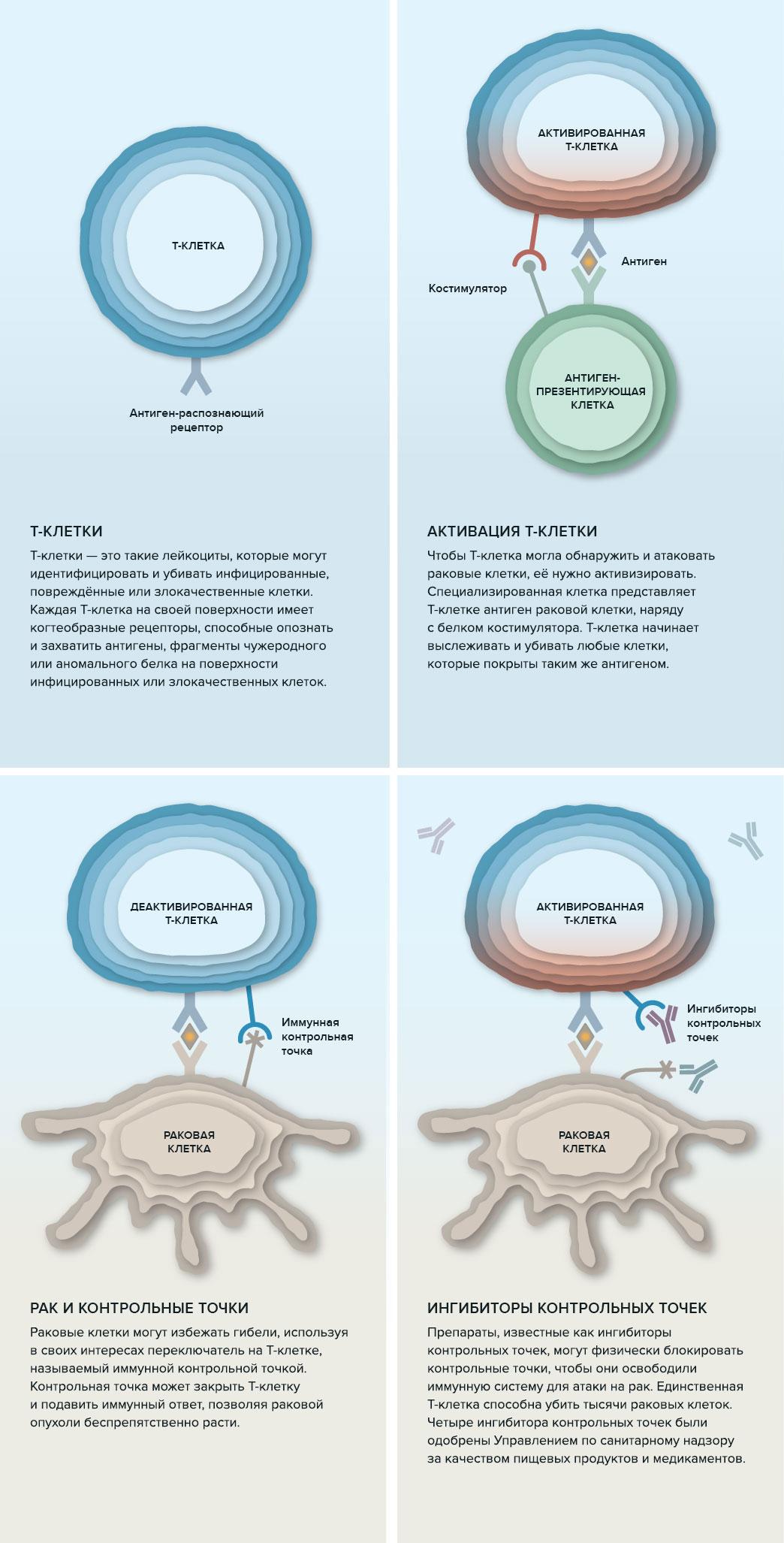 Почему иммунная система, активированная для лечения рака, может атаковать здоровые клетки