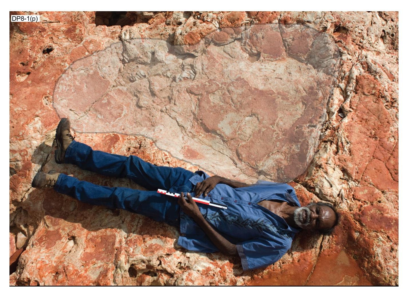 Среди тысяч следов попадаются вот такие отпечатки ног зауроподов.
