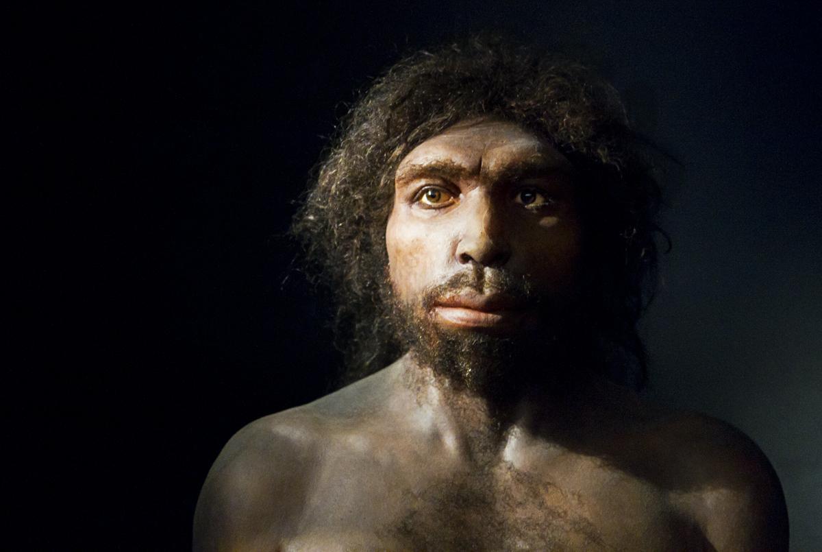 Реконструкция <i>Homo antecessor</i>.