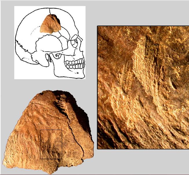 Фрагмент черепа из пещеры Санта-Майра, со следами орудий.