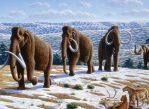 Когда-то мамонты населяли всю Евразию. Так же обитали в Африке и Северной Америке.
