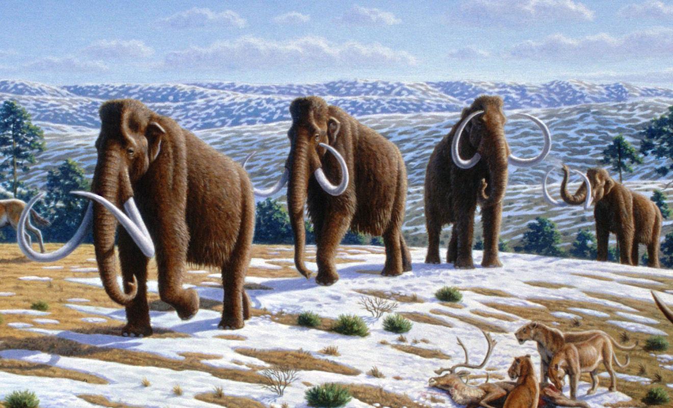 Когда-то мамонты населяли всю Евразию. Также обитали вАфрике иСеверной Америке.