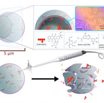 Создана система доставки химиопрепаратов наоснове микрочастиц