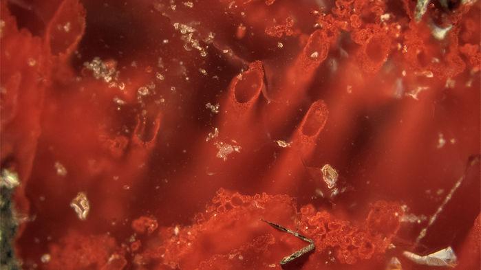 Микроскопические трубочки вотложениях кварца.