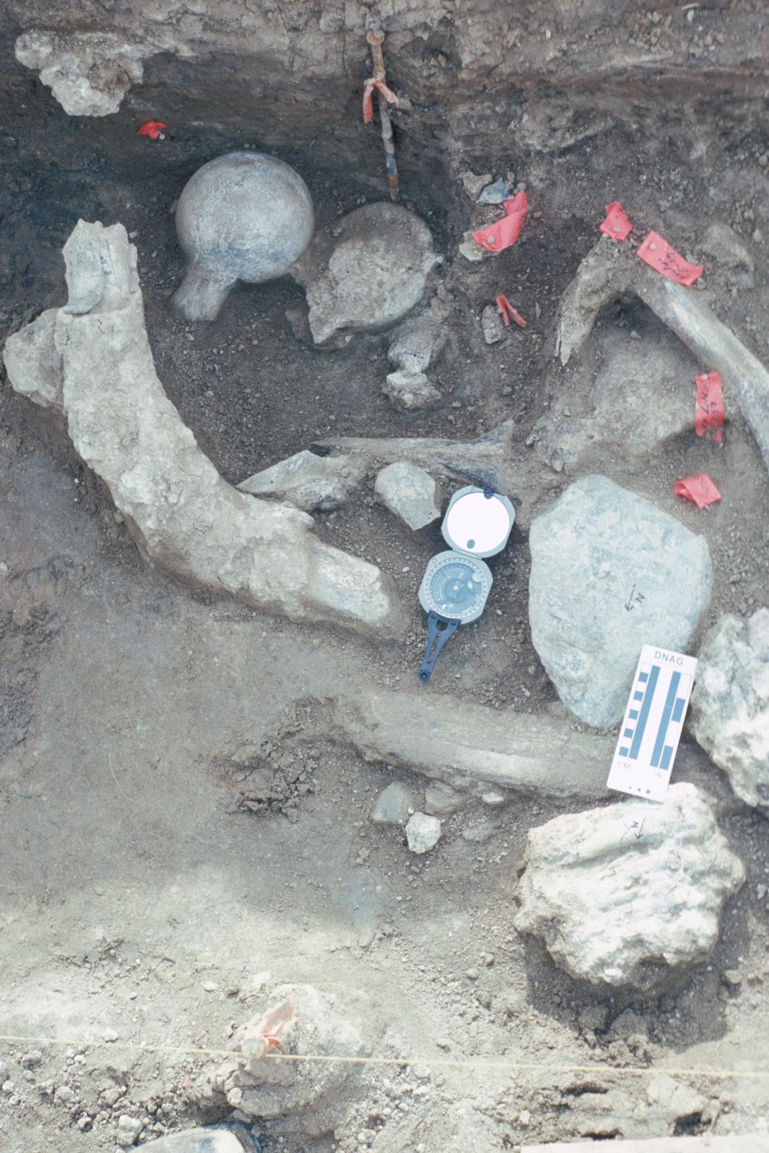 Останки мастодонта игалька из Черутти-Мастодонт.