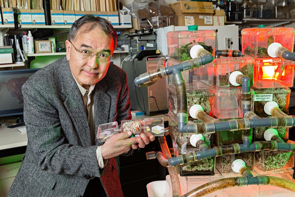 Руководитель научной группы Тед Шульц иего подопечные— муравьи.