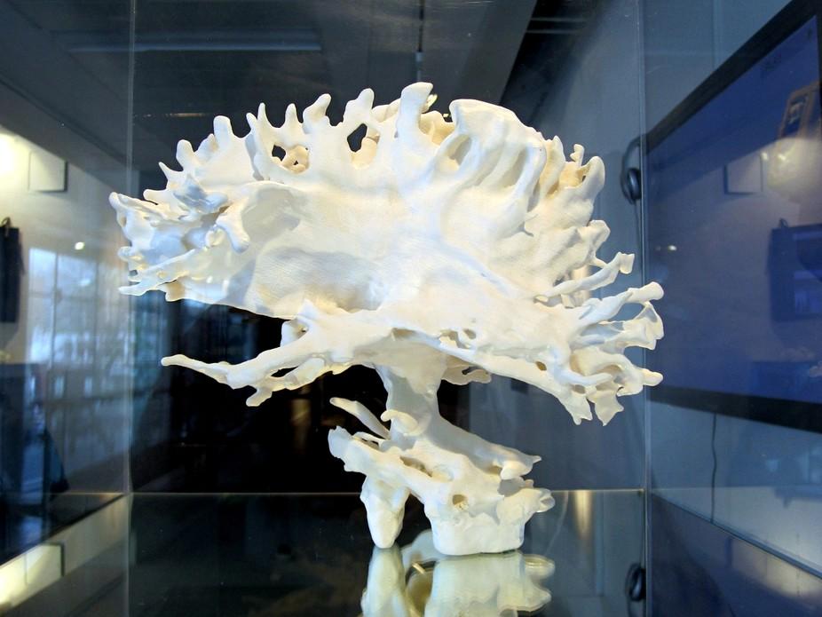 Выбрала ли нейронаука верный путь?