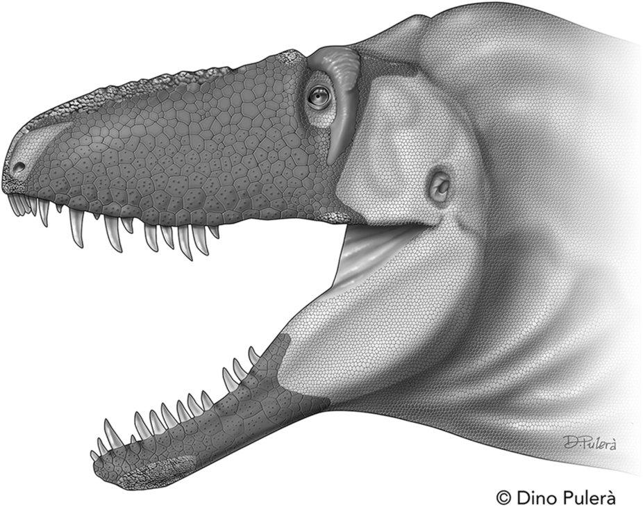 Реконструкция внешних покровов рыла <i>Daspletosaurus horneri</i>.