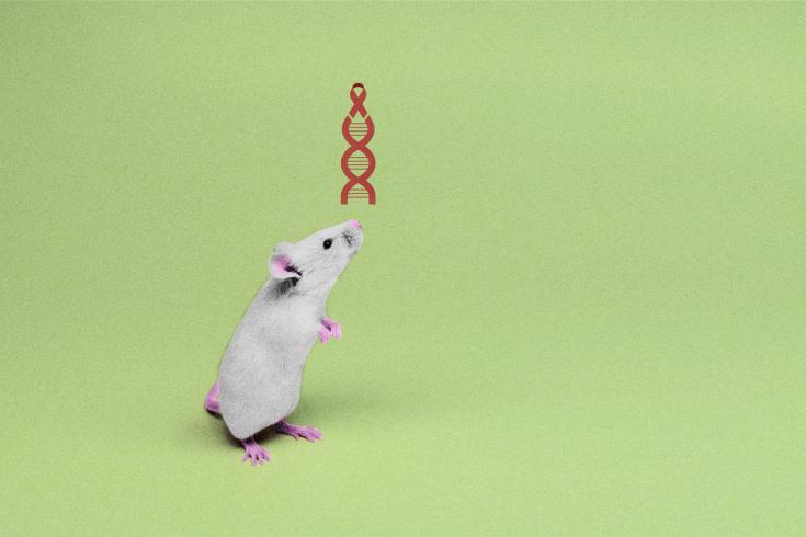 Пока результаты лечения ВИЧ-инфекции  при помощи CRISPR получены намышах. Наочереди— приматы.