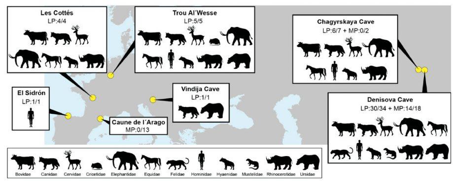 Семейства древних млекопитающих, чья генетическая информация найдена вобразцах отложений (по 7 памятникам). LP— поздний плейстоцен. MP— средний плейстоцен.