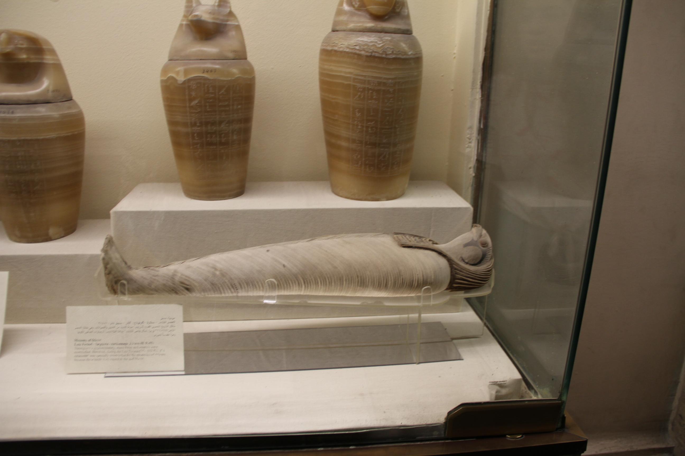 Мумия сокола. Каирский музей