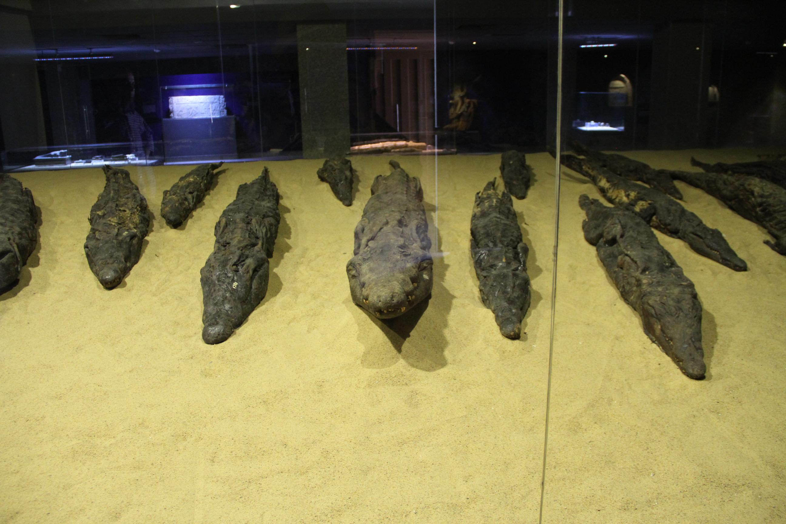 Мумии крокодилов. Музей крокодила рядом схрамом Себека.