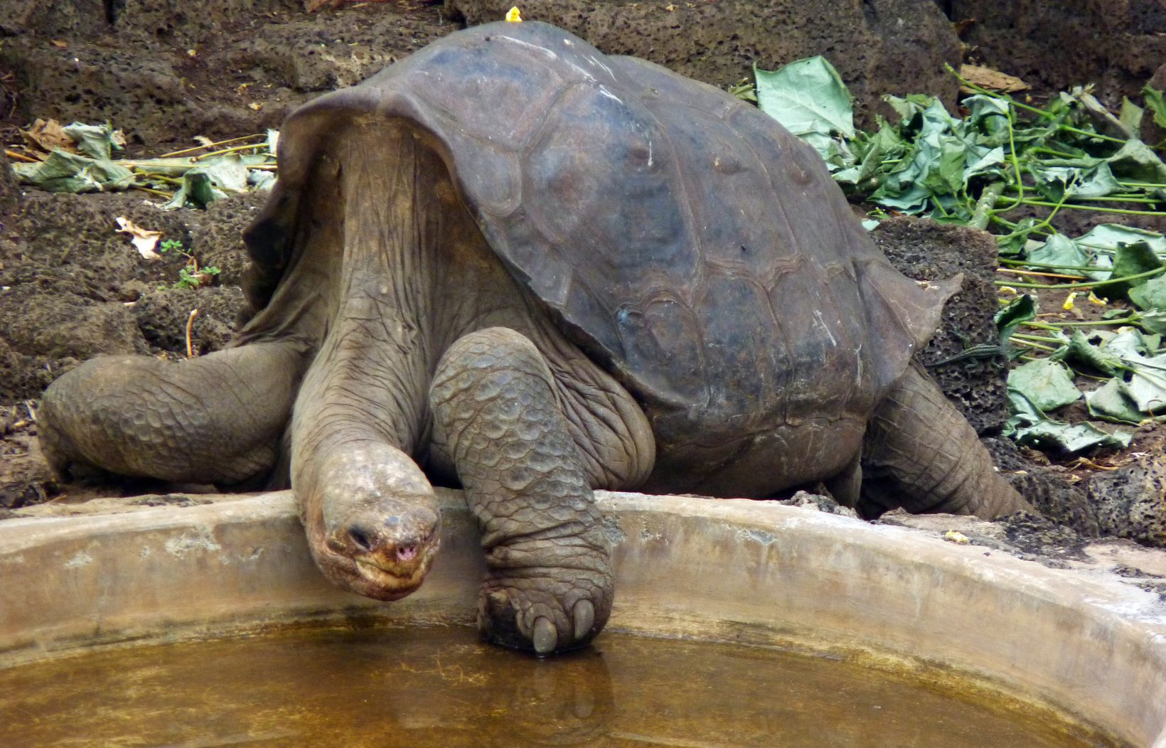 Nude Male Celebrities Super-Site with over 75,000 pictures Pictures of pinta island tortoise