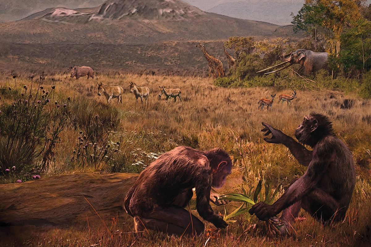 Грекопитек— первый представитель гоминид?