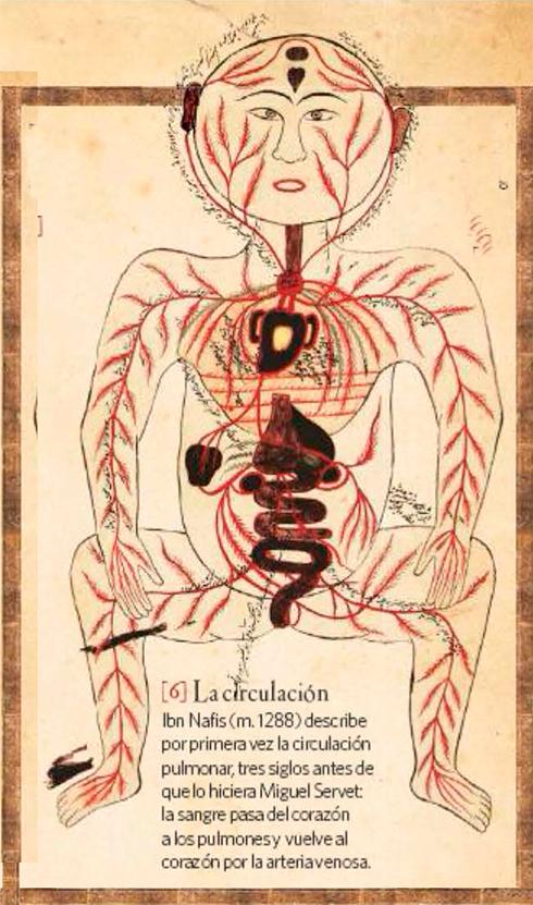 План строения кровеносной системы. Рисунок Ибн ан-Нафиса.