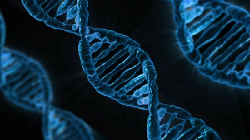 """CRISPR позволяет «вырезать» и«вклеивать» нужные фрагменты <abbr lang=""""ru"""" title=""""Дезоксирибонуклеиновая кислота"""">ДНК</abbr>. Но, по всей видимости, нетолько их."""