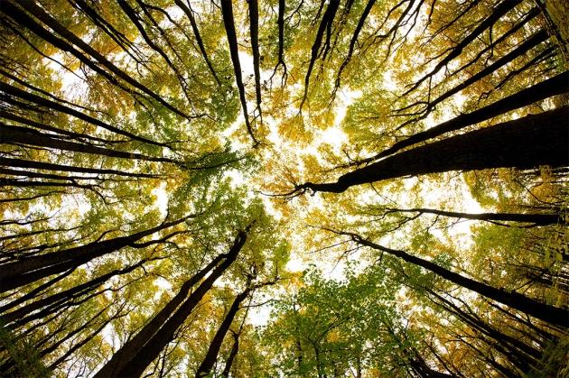 Изменение климата вСША заставляет деревья мигрировать насевер изапад.