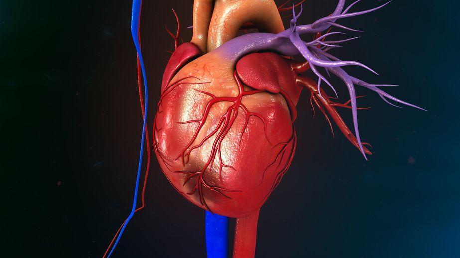 Мышечная ткань сердца неспособна квосстановлению, поэтому повреждения после инфарктов носят необратимый характер.