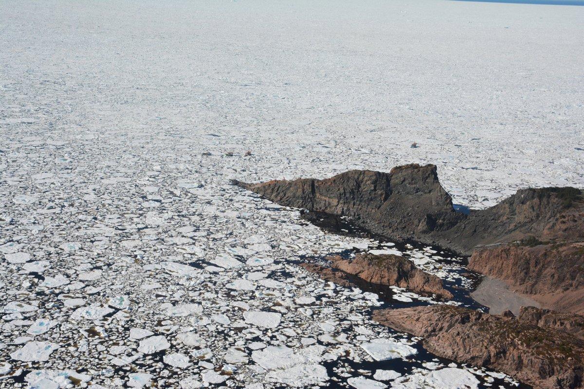 Лёд уберегов острова Ньюфаундленд. Фото сделано 8 июня. Источник: CBS.