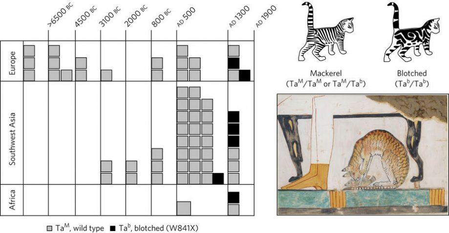 Распространение типов окраса кошек вразные эпохи