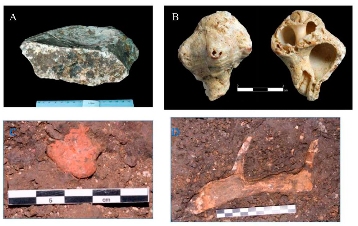 Находки вслое 3b: А) камень-манупорт; B) раковина морского моллюска; С) охра; D) олений рог.