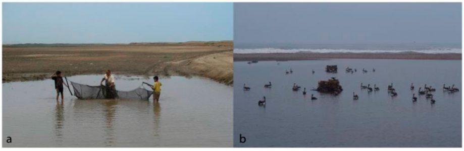 Современные перуанцы— охотники ирыболовы: а)  ловля рыбы сетью вобразовавшейся сезонной лагуне; б) охота напеликанов из двух тростниковых укрытий.