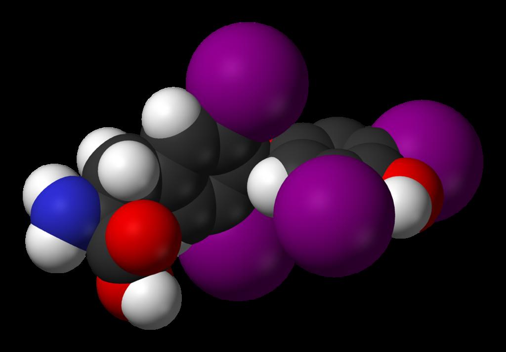 Модель молекулы тироксина. Фиолетовым обозначены атомы йода.