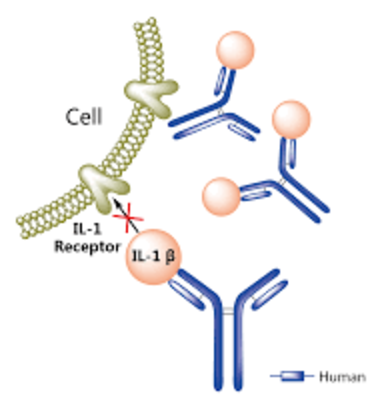 Рисунок 5. Canakinumab связывается сIL-1β ине даёт ему взаимодействовать срецептором наповерхности клетки