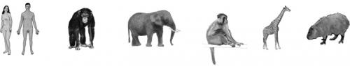 Шкала когнитивных способностей, построенная наосновании числа нейронов вкоре