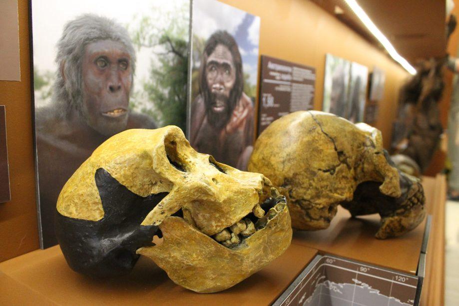 Фото: Биологический музей имени К.А.Тимирязева