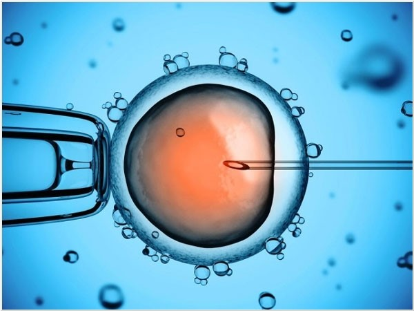 Рисунок 2. Микрофотография манипуляций счеловеческой яйцеклеткой