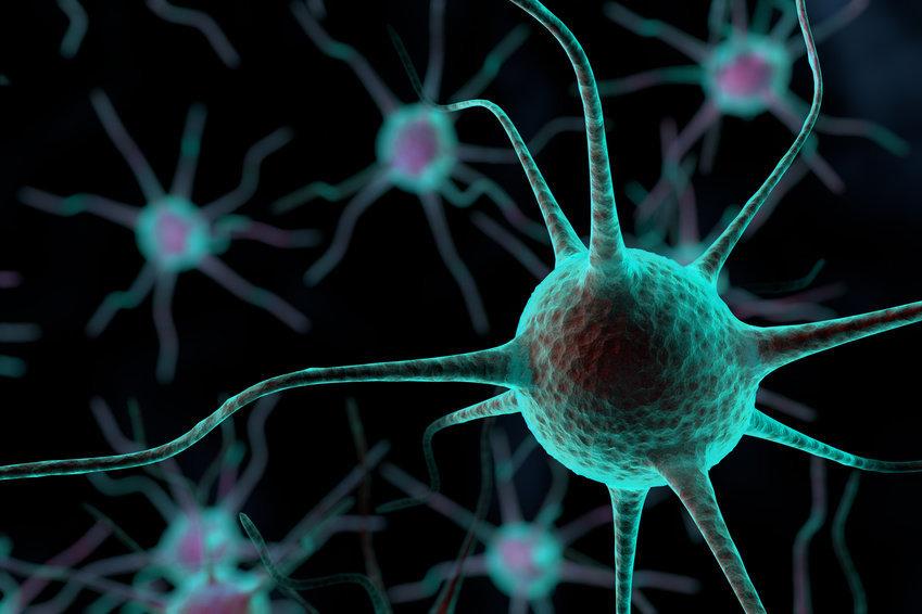 Мозг взрослой дрозофилы содержит около 100 тыс. нейронов, мозг человека— от 86 до 100млрд нейронов.