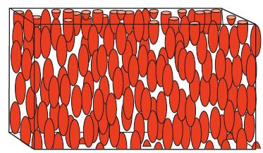 Изображение 3— Структура нематической ЖК фазы.