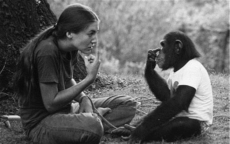 Согласно исследованию, люди ишимпанзе одинаково склонны ккопированию действий друг друга