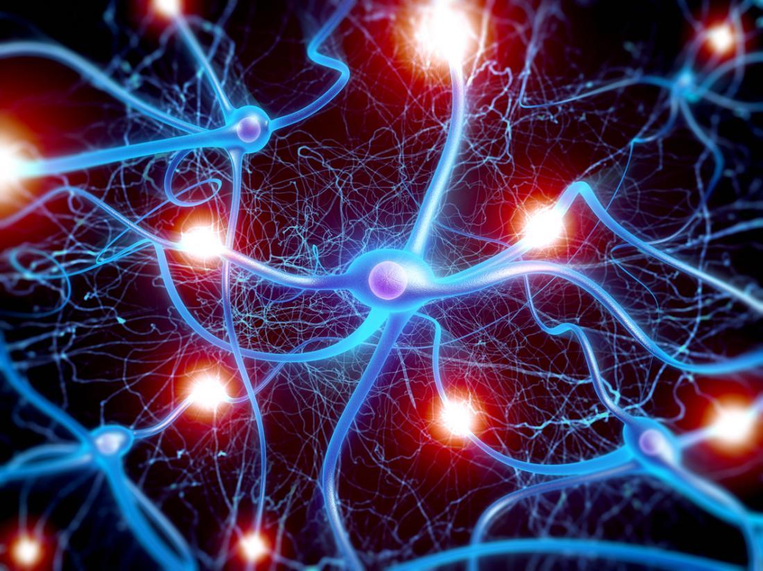 Аксоны— важнейшие части нейронов. Именно они, наряду сдендритами, обеспечивают связь между клетками нервной системы.