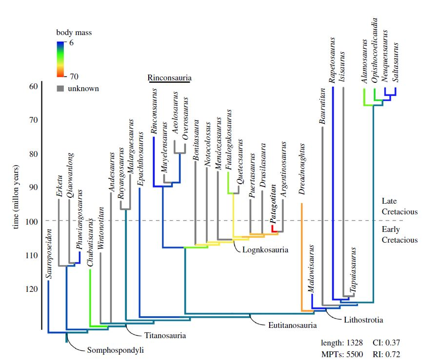 Эволюционное дерево зауропод. <i>Patagotitan mayorum</i>— один из самых крупных видов, живший всередине мелового периода.