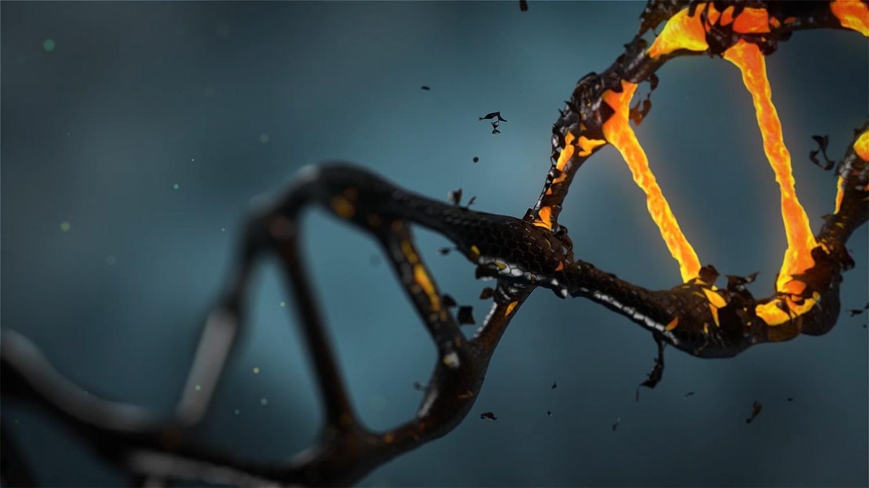Эволюция «слепа», когда речь идёт оработе генов после завершения репродуктивного возраста.
