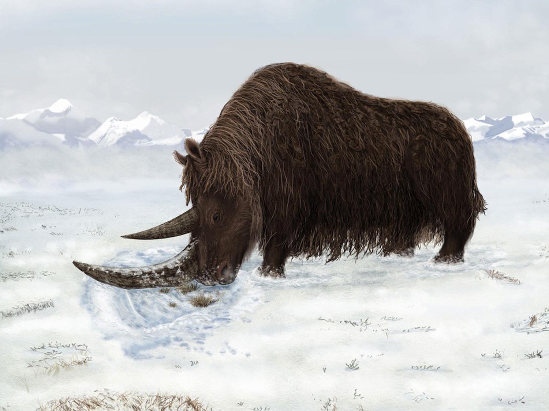 Реконструкция внешнего облика шерстистого носорога.