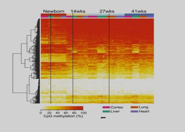 Изображение 6— по оси Y CpG сайты, по оси Х возраст. Иллюстрация изменения метилирования генов со временем