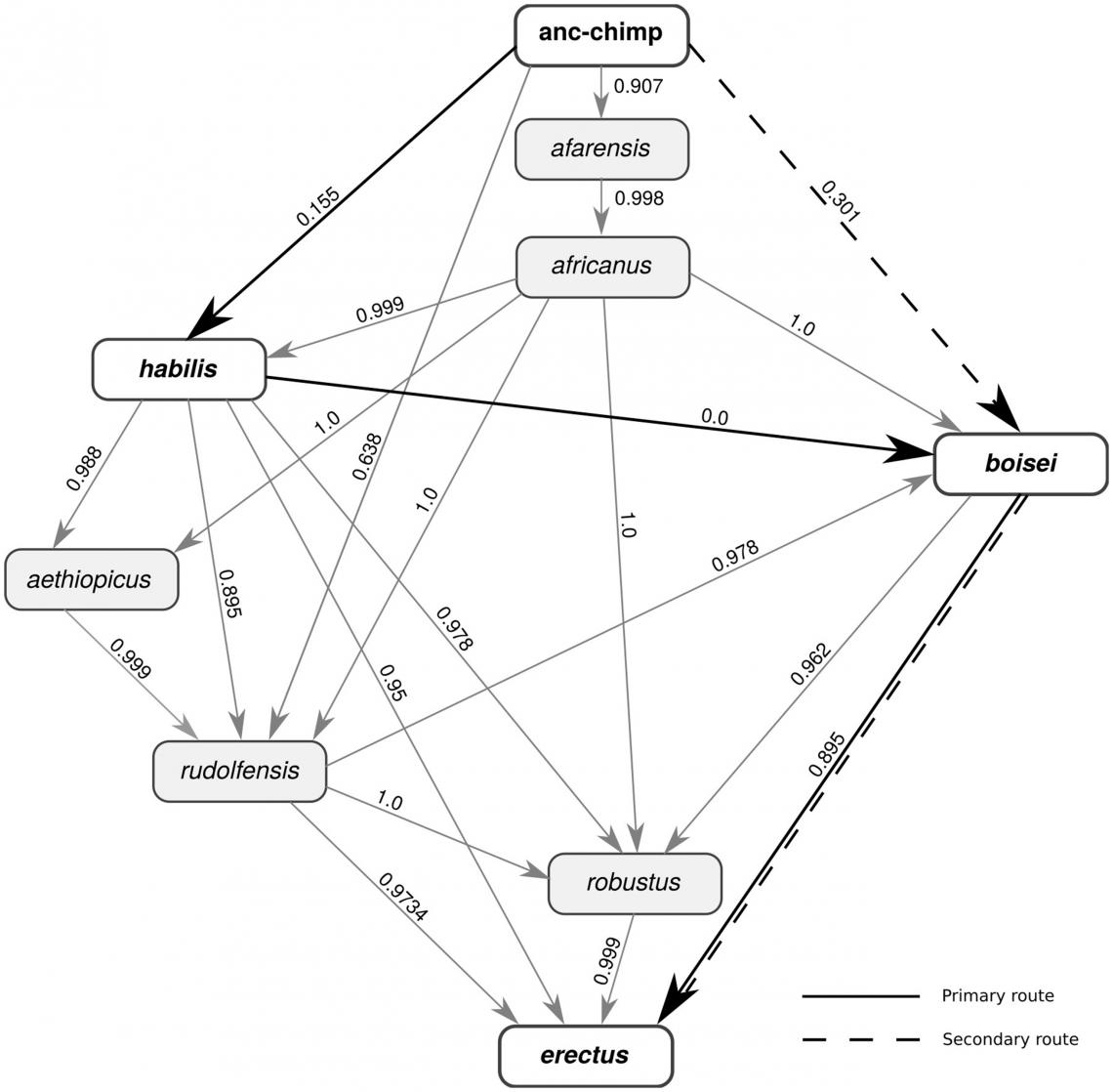 Возможные маршруты герпеса от предка шимпанзе кHomo erectus