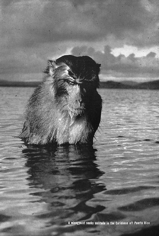 «Женоненавистник». Знаменитое фото из журнала LIFE от 16 января 1939г.