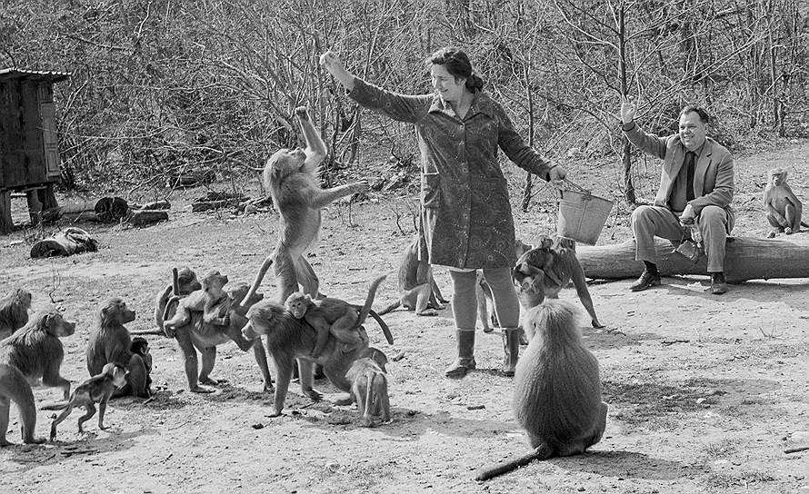 Сухумский обезьяний питомник, 1970-е годы. Фото: Григоров И./Фотохроника ТАСС
