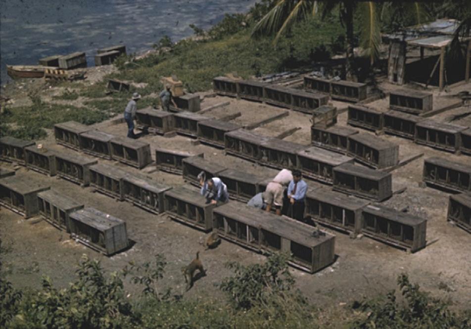 Оригинальные клетки, вкоторых макак привезли вКайо Сантьяго