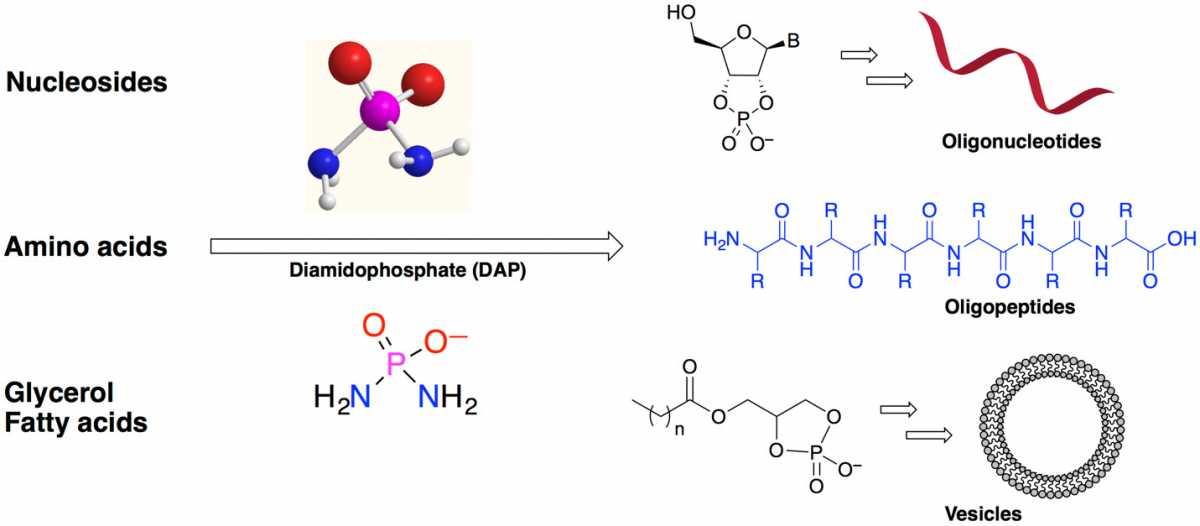 Фосфорилирование трёх видов органических соединений