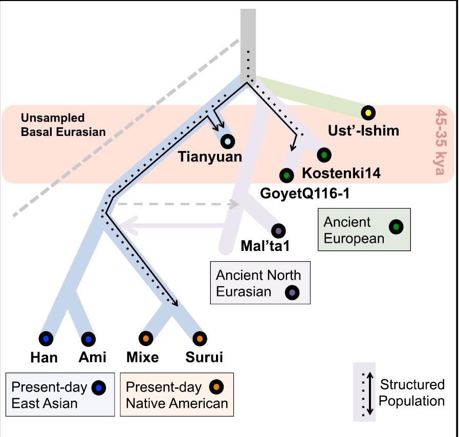 Родственные связи древних исовременных популяций Евразии иАмерики, включая Тяньюань.
