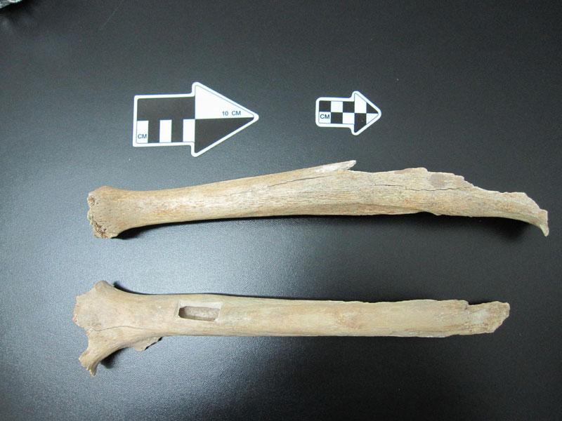 Костные фрагменты из пещеры Тяньюань, из которых извлекалась дезоксирибонуклеиновая кислота. Источник: MPI for Evolutionary Anthropology