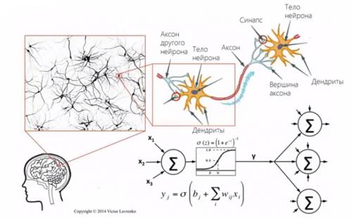 Аналогия между искусственными нейронными сетями инейронами вмозге