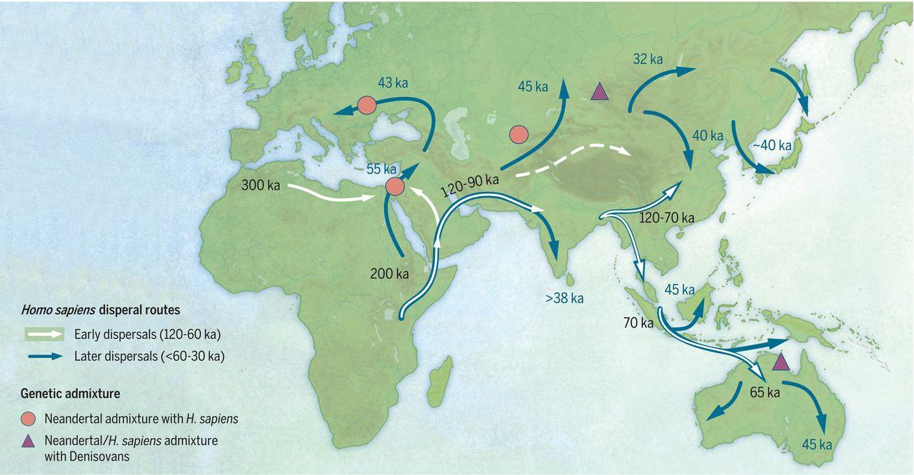Вероятные пути миграций древних сапиенсов. Белые стрелки— миграции 120—60 тыс. лет назад, синие стрелки— миграции 60—30 тыс. лет назад. Красные кружки— места вероятной метисации снеандертальцами, сиреневые треугольники— места вероятной метисации сденисовцами (почему-то, втом числе, вАвстралии!)