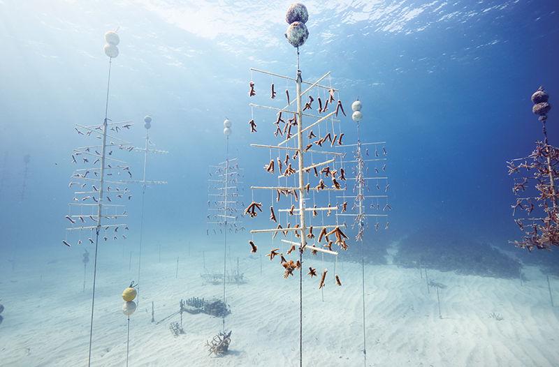 «Ремонт рифов».